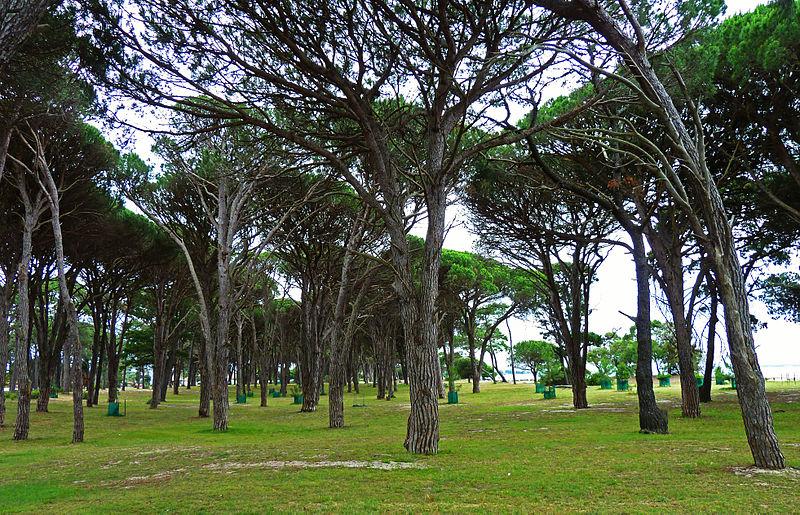 File:Cook Park, Sans Souci, New South Wales (2010-11-28) 08.jpg