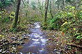Coplar Creek near Orting.jpg