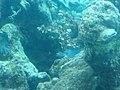 Coral World Underwater Observatory 38.jpg