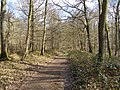Course of the Roman road through Harewood Forest - geograph.org.uk - 147453.jpg