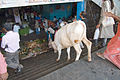 Cow going down stairs at City Market, Bangalore in May 2008.jpg