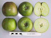 Cross section of Granny Smith (LA 73A), National Fruit Collection (acc. 1976-145).jpg