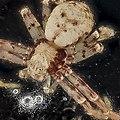 Cuvette Plastic spider (9736086184).jpg