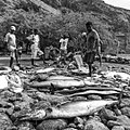 Découpe du poisson. Pêche traditionnelle, Tarafal de Monte Trigo, île de Santo Antao, Cap-Vert.jpg