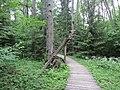 Dūkštų sen., Lithuania - panoramio (41).jpg