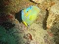 DSC00258 - peixe - Naufrágio e recifes de coral no Nilo.jpg
