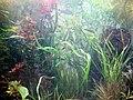DSC26522, Monterey Bay Aquarium, California, USA (5058941660).jpg