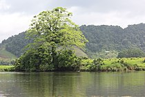 Daintree River, North Queensland.jpg