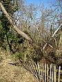 Damaged fence - geograph.org.uk - 691743.jpg