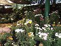 Dargeeling garden.jpg