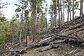 Davis Creek Park - panoramio (55).jpg