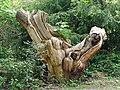 Dead tree, Warren Road (2) - geograph.org.uk - 1861449.jpg