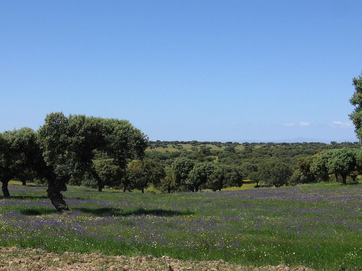 Clima de extremadura wikipedia la enciclopedia libre for Clima mediterraneo de interior