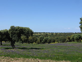Dehesa - Dehesa in Extremadura, Spain