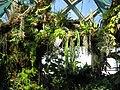 Denver botanic orchid.JPG