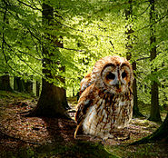 Der Waldkauz als Spottdrossel