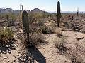 Desert 5 (15746543060).jpg