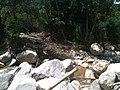Destruição^ 2013, aonde o rio transbordou... - panoramio (7).jpg