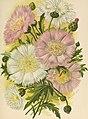 Die Gartenwelt (1900) (20732575829).jpg
