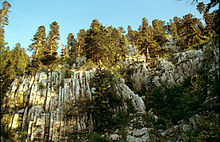 Dinaric calcareous fir-forest.jpg