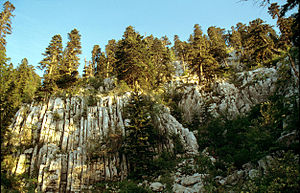 Dinaric calcareous block fir forest - Pure silver fir forests are endemic to the Dinaric alps and especially to Orjen