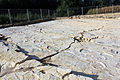 Dinosaur tracks in Courtedoux, Switzerland 05.jpg