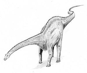 Diplodocus4
