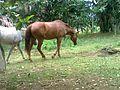 Dois Cavalos - panoramio.jpg