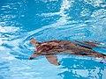 Dolphins (7981056678).jpg