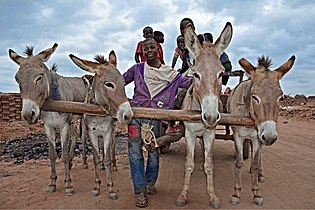 Donkey love.jpg