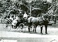 Dr. Dittlinger and family in last carriage owned by doctor before he built his first auto, Forest Park, July 30, 1897.jpg