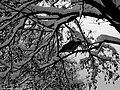 Drzewo i ptak - panoramio.jpg