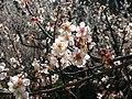 Dscn0031 japan nature.jpg