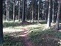 Dusetų sen., Lithuania - panoramio (108).jpg
