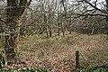 East Anstey, woodland near Whiteford Cross - geograph.org.uk - 390905.jpg