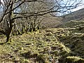Edge of old woodland - geograph.org.uk - 1172630.jpg