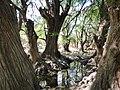 El Sabinal, Salto de los Salado, Aguascalientes 49.JPG