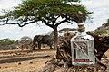 Elephant GIN.jpg