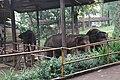 Elephant in the Zoo.jpg