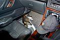 Ellie in my car. (31091408734).jpg