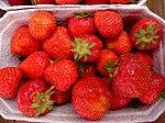 Erdbeere Senga Sengana.JPG