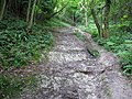 Erosion of top soil on bridleway climbing Westburton Hill - geograph.org.uk - 1407742.jpg