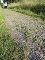 FFM-Preungesheim Eselsweg-Pflaster 3.jpg