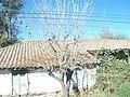 FOTO CASA ANTIGUA SEPTIMA REGION DE CHILE - panoramio.jpg