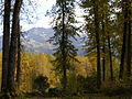 Fall Cottonwoods, Girdwood.jpg
