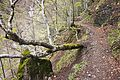 Fallen tree and trail.jpg