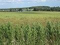 Farmland east of Charsfield, looking to Prospect Farm - geograph.org.uk - 859995.jpg