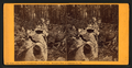 Father of the Forest, circumference 112 feet at base, Mammoth Trees of Calaveras Co., Cal, from Robert N. Dennis collection of stereoscopic views.png
