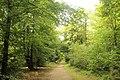 Faux de Verzy, forest trail-2.JPG