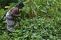 Femme agricultrice dans un champ.jpg